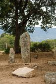 picture of megaliths  - The menhirs alignment of Renaggiu in the megalithic site of Cauria Sartene area Corsica France - JPG