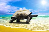 picture of sea-turtles  - Big Turtle on the tropical oceans beach - JPG
