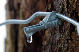 image of maple tree  - Closeup of a maple sugar tap for getting sap from a maple tree Vermont