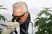 Cannabis Research Scientist examines and researches the benefits of Pharmaceutical Grade Cannabis fo poster