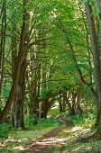 A Beautiful Path In The Summer Forest, A Path In The Spring Forest, A Forest Path Between The Trees poster