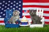 Adorable Small Fluffy Grey Kitten Sitting On A White Chair, Grey And White Tabby On Blue Chair In Gr poster