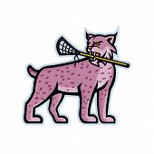 Sports Mascot Icon Illustration Of A Lynx, Canada Lynx, Eurasian Lynx Or Bobcat Biting A Lacrosse St poster