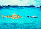 Big Shark Made Of Goldfishes Attack A Real Scared Shark. Concept Of Unity Is Strength, Teamwork And  poster
