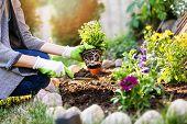 Gardener Planting Summer Flowers In Garden Bed poster