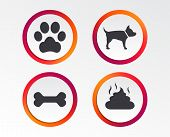 Pets Icons. Dog Paw And Feces Signs. Clean Up After Pets. Pets Food. Infographic Design Buttons. Cir poster