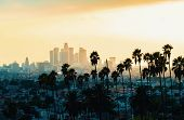 Downtown Los Angeles Skyline At Sunset With Palm Trees In The Foreground poster