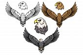 American Eagle Set. Bald Eagle Logo. Wild Birds Drawing. Head Of An Eagle. Vector Graphics To Design poster