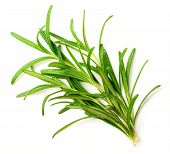 Fresh Herb, Fresh Rosemary Isolated On White Background poster
