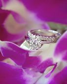 Diamond Solitaire Engagement Ring And Circle Of Diamonds Wedding Ring Sitting On The Purple Petals O poster