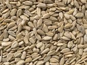 picture of sunflower-seed  - Organic sunflower seeds in their raw state - JPG
