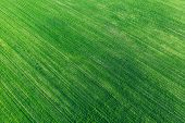Aerial View Green Spring Field Landscape With Trails Lines. Flat View Of Natural Summer Green Meadow poster