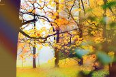 image of poetry  - Misty and damp autumn park - JPG