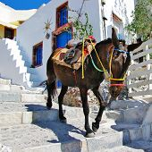 stock photo of donkey  - donkey on stairs of Santorini - JPG