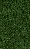 picture of anaconda  - pattern of green crocodile skin  - JPG