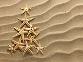 stock photo of shells  - Christmass tree from shells on sand background - JPG