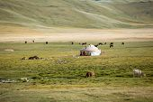 stock photo of yurt  - Farm animals pasturing near yurt, Kyrgyzstan. See my other works in portfolio.