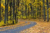 picture of twisty  - Winding asphalt road with autumn foliage  - JPG