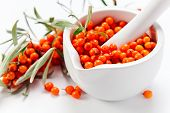 picture of sea-buckthorn  - sea - JPG