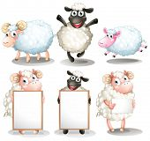 stock photo of lamb  - Illustration of the sheeps and lambs with empty boards on a white background - JPG