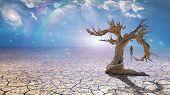picture of wander  - Wanderer on dried desert mud - JPG
