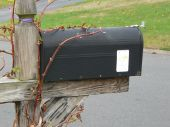 Vine growing on a mailbox pic.