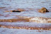 stock photo of priceless  - shallow waters at the edge of a lake with rocks and mud for a natural background - JPG
