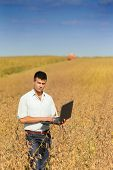 picture of soybeans  - Young businessman with laptop standing on soybean field during harvesting - JPG