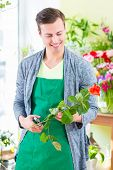picture of tong  - Young handsome florist cutting rose with tongs in shop - JPG