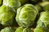 pic of brussels sprouts  - Raw Green Organic Brussel Sprouts on the Stalk