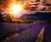 foto of lavender field  - lavender field Summer sunset landscape with contrasting colors - JPG