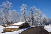 picture of afforestation  - Forestry in winter stable of round wood - JPG