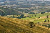 foto of prairie  - Prairie path through hillsides with dry vegetation - JPG