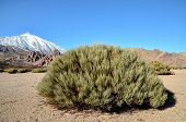 picture of volcanic  - Desert Landscape in Volcan Teide National Park - JPG