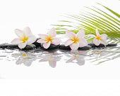 pic of frangipani  - Spa set with zen stones and Frangipani and palm leaf  - JPG