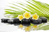 picture of frangipani  - palm leaf background with zen stones and Frangipani  - JPG