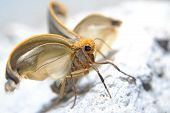 pic of moth  - the beautiful moth spreading the wings for the first time - JPG