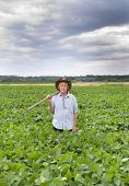 picture of soybeans  - Senior farmer carrying fork on the shoulder and walking in green soybean field - JPG