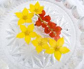 pic of chloroplast  - yellow flowers in water and berries of a red currant - JPG