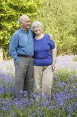 picture of old couple  - Senior couple in woodland full of beautiful springtime bluebells - JPG