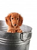 Wet puppy in a stainless steel tub.