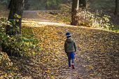 Little Toddler Boy Walking Alone Through Autumn Forest. Path In Life. Bullying In School Concept. Sc poster