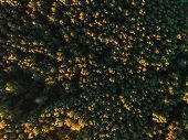 Taiga Forest Of Tomsk Siberia, Russia. Drone Aerial Top View. poster