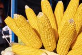 Yellow Corn On Stick. Boiled Corn For Sale. Sweetcorn Streetfood. Summer Street Food Closeup Photo.  poster
