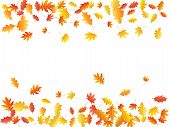 Oak And Maple Leaf Cool Frame Background Seasonal Vector Illustration. Autumn Leaves Flying Graphic  poster