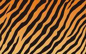 Постер, плакат: Текстура тигра