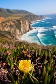 picture of bixby  - Yellow Wildflower Blooming along the Beautiful Coastline in Big Sur - JPG