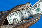 stock photo of loan-shark  - The fish mouth holds dollar on blue background - JPG