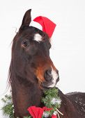 stock photo of horse wearing santa hat  - Adorable dark bay Arabian horse with a Santa hat and  Christmas wreath - JPG