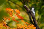 picture of woodpecker  - Woodpecker perched on a branch - JPG